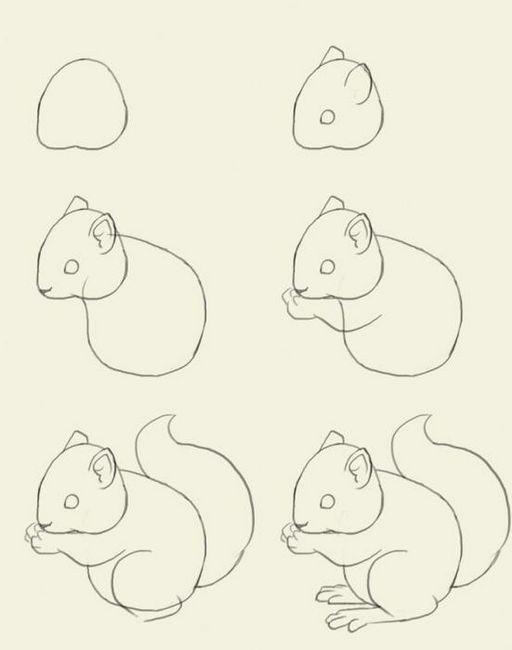 Cum să atragă o veveriță pur și simplu?
