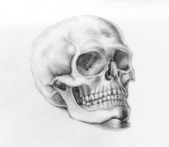 Cum de a desena un craniu, respectând proporțiile?