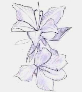 cum să atragă orhideea