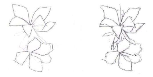cum să desenezi o orhidee în etape