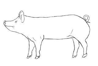 cum să atragă un porc