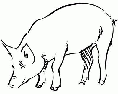 cum să desenezi un porc în etape cu un creion