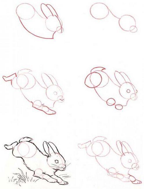 cum să atragă un iepure