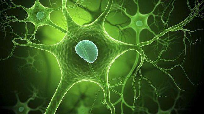 care este numele răspunsului la mediul celular intern