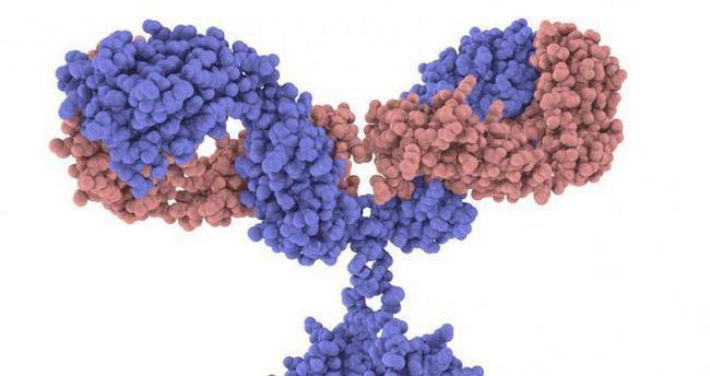 unde sunt produse anticorpi