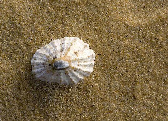 În cazul în care în regiunea Krasnodar plaje cu nisip