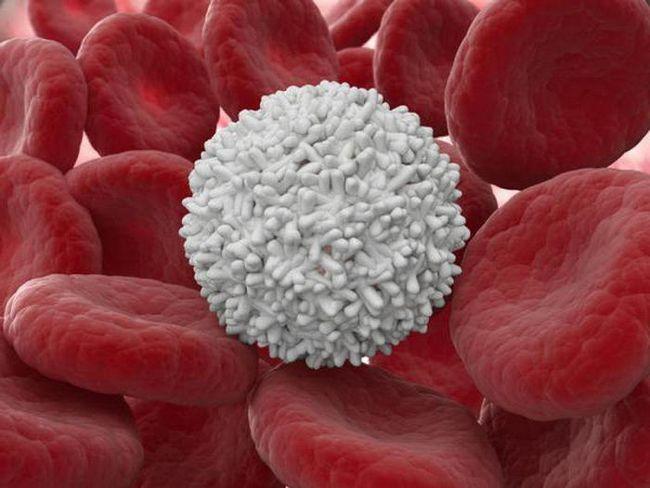 modul în care celulele albe din sânge sunt desemnate într-un test de sânge clinic