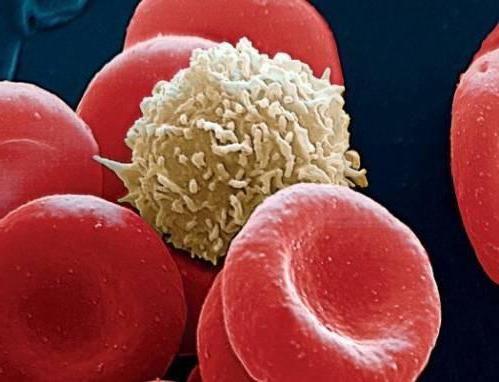 cum sunt marcate celulele albe în sânge la copii