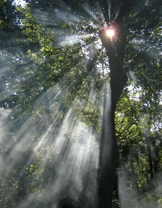 lumina soarelui