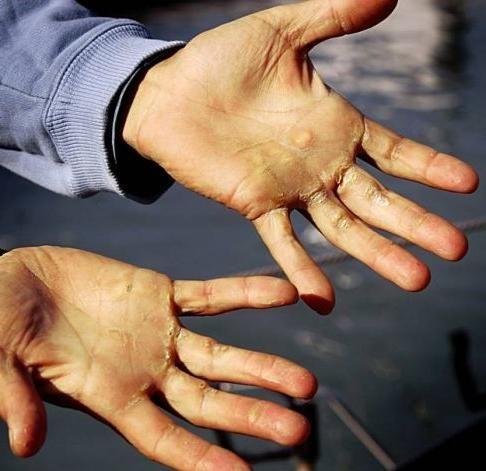 porumb pe mână ce să facă