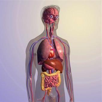 Localizarea organelor