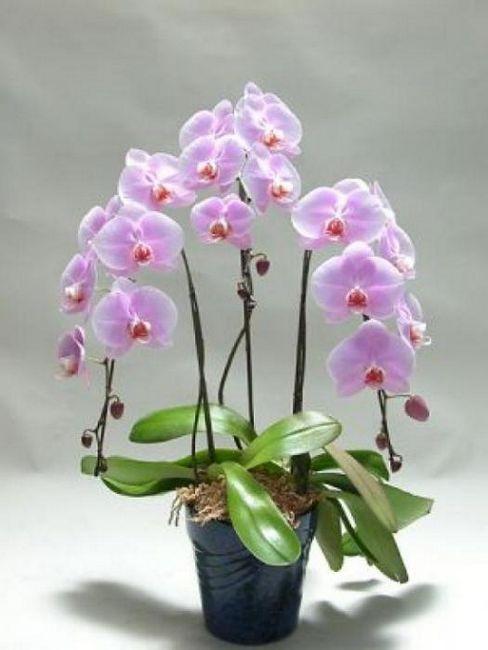 cum sa faci o floare de orhidee