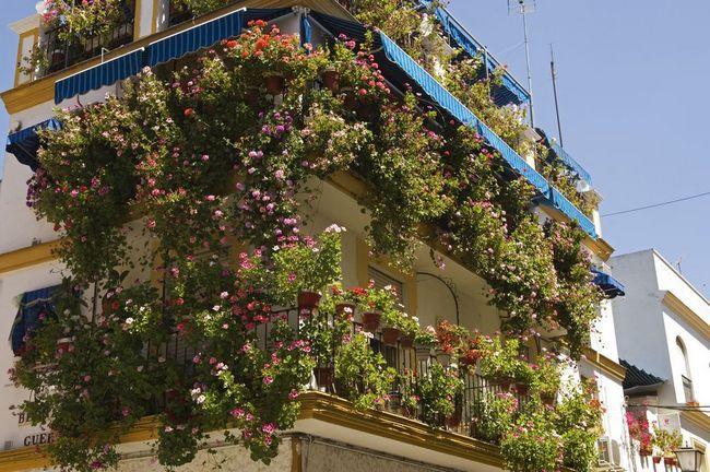 Ce flori să planteze pe balcon pentru a înflori toată vara: numele