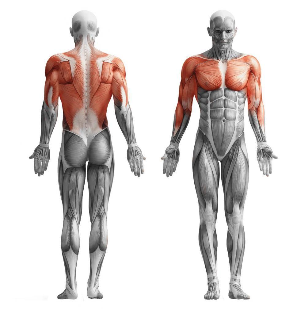 Ce funcționează mușchii atunci când trageți bara - descriere, un set de exerciții și recenzii