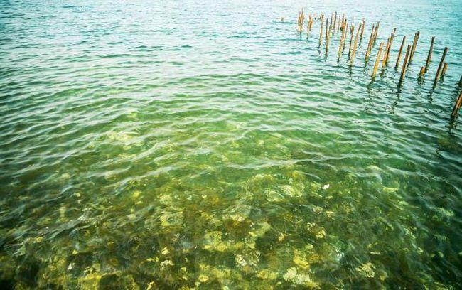 Anapa în august: recenzii, flori de mare