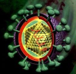 perioada de incubație a hepatitei c
