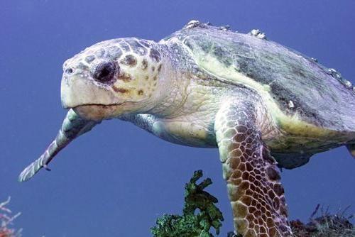 Ce fel de broască țestoasă trebuie să alegeți pentru o casă?