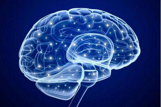 volumul creierului uman