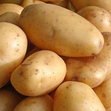 varietate de albastru de cartofi