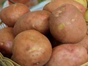 Potato Irbit Descriere Varietate Recenzii de fotografii