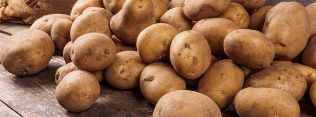 Descrierea cartofilor Colombo