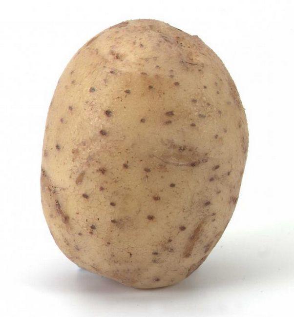 cartofi doamnă adăpare