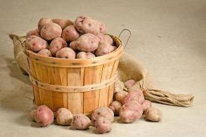 Cartofi Rowanberry caracteristice soiului, marturii