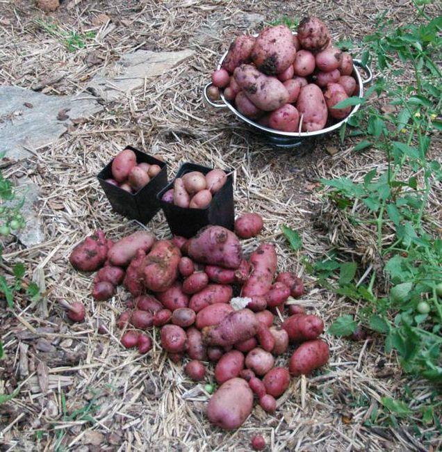 Cartofi asortați