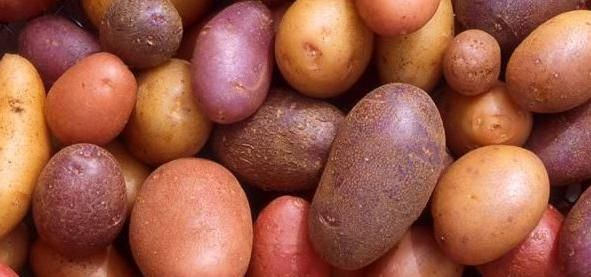 Descriere roșie a soiurilor de cartofi