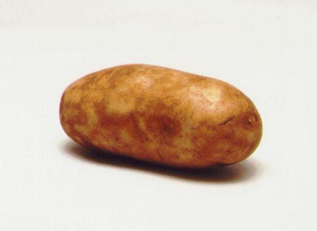 Caracteristicile cartofului Rocco