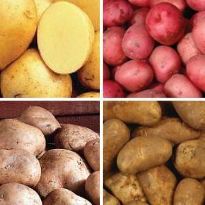 Cartofi de semințe
