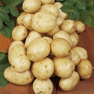 Semințe de cartofi