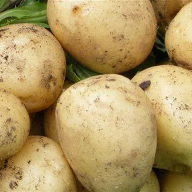 Cartofi Vega