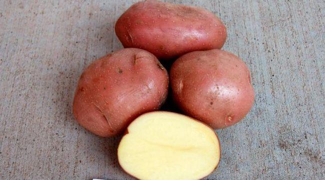 cartofi de zahăr alb