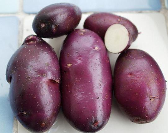 cartofi albastru