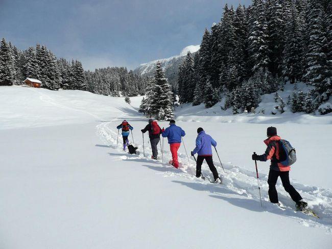 Trasee de schi