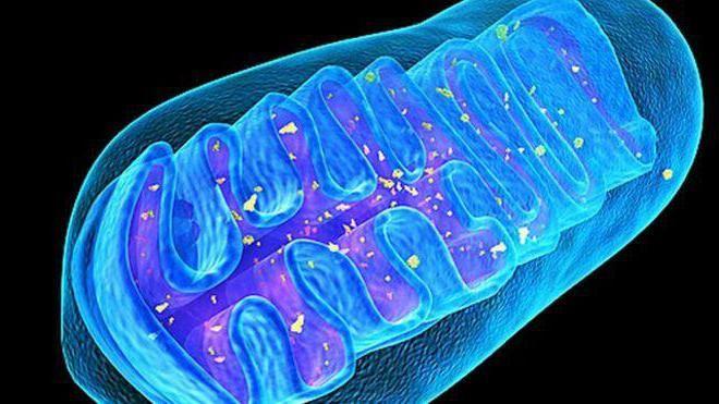 respirația celulară aerobă