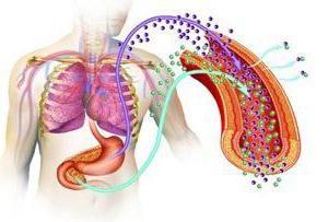 mecanismul de acțiune al hormonului de contraindlinie