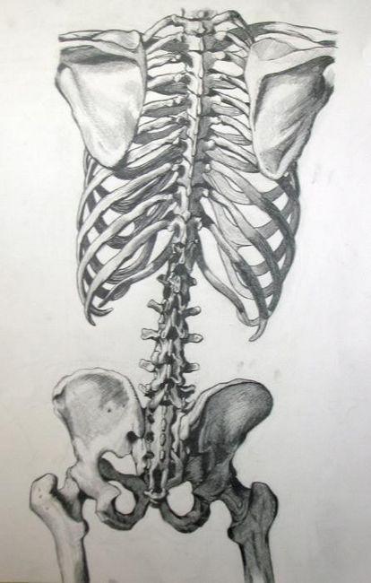 un schelet al unei persoane cu numele de oase