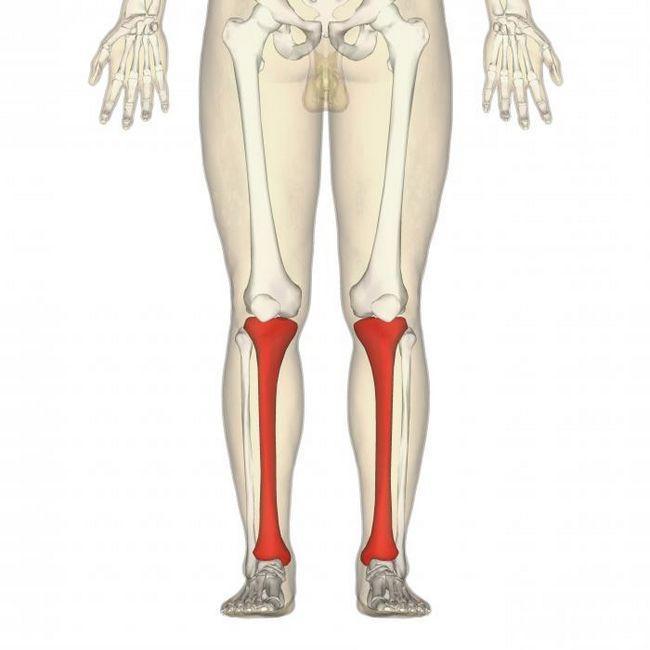 oasele extremităților inferioare ale anatomiei umane