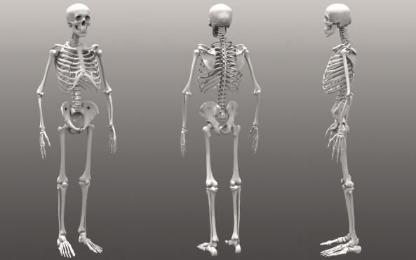 un schelet uman o conexiune de oase