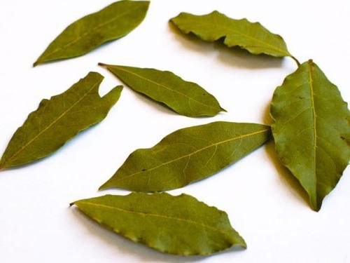 frunza de dafin este bună și rea
