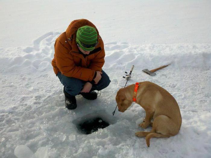 înghețarea este o natură vie