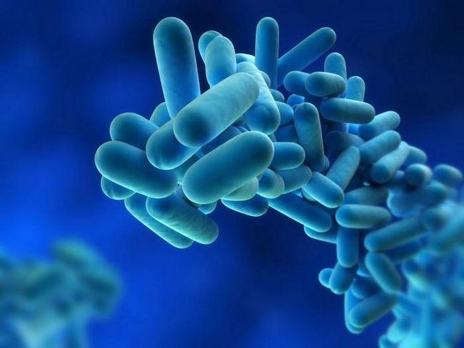 Legioneloza, simptome de legioneloză