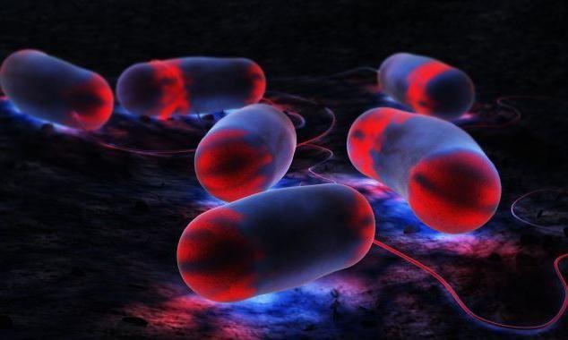 Legioneloza, simptome, diagnostic, tratament