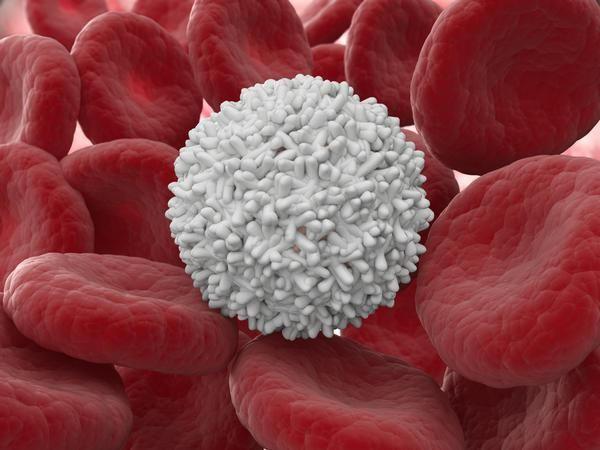 Multe leucocite