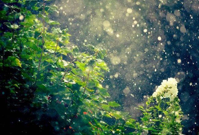 ploaia naturii