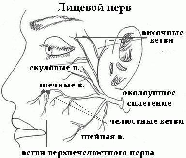 anatomia topografică a nervului facial
