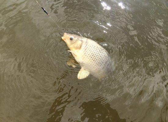 Captura de pescuit în timpul iernii: tehnica de pescuit, luptă, momeală și momeală