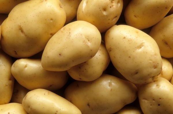 Varietate de cartofi Neva
